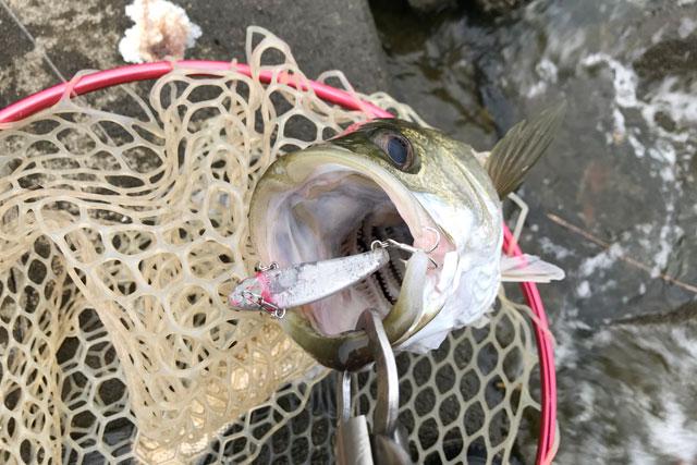 【涸沼シーバス 2020年8月中旬】梅雨が明けた8月の涸沼釣行をまとめてお届けします!